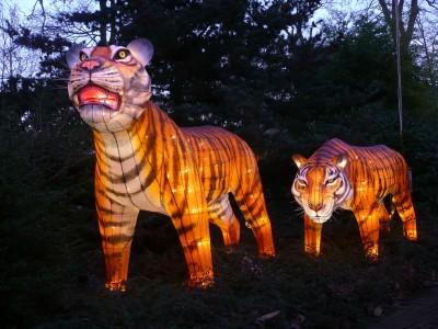 Tiger_Lantern